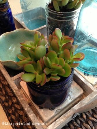 succulents3WM