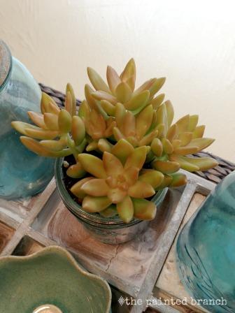 succulents4WM